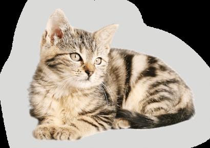 ваксини котка